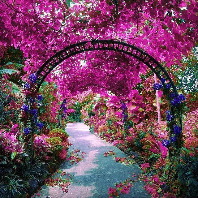 pinker-singapore