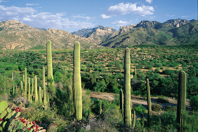 Free Yourself with a Hike in Tucson