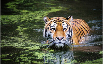 Places with Tiger Tours To Visit In India